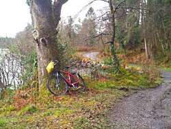 Glenfarne Wood. Self guided bike tour YCL