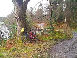 Séjour liberté à vélo, la forêt de Glenfarne