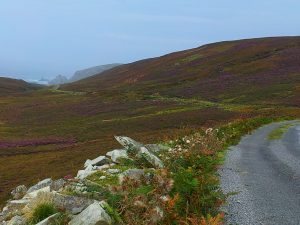 Heather covered hills on Irish cycling holidays.